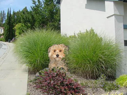 A surprise Behind the Shrub