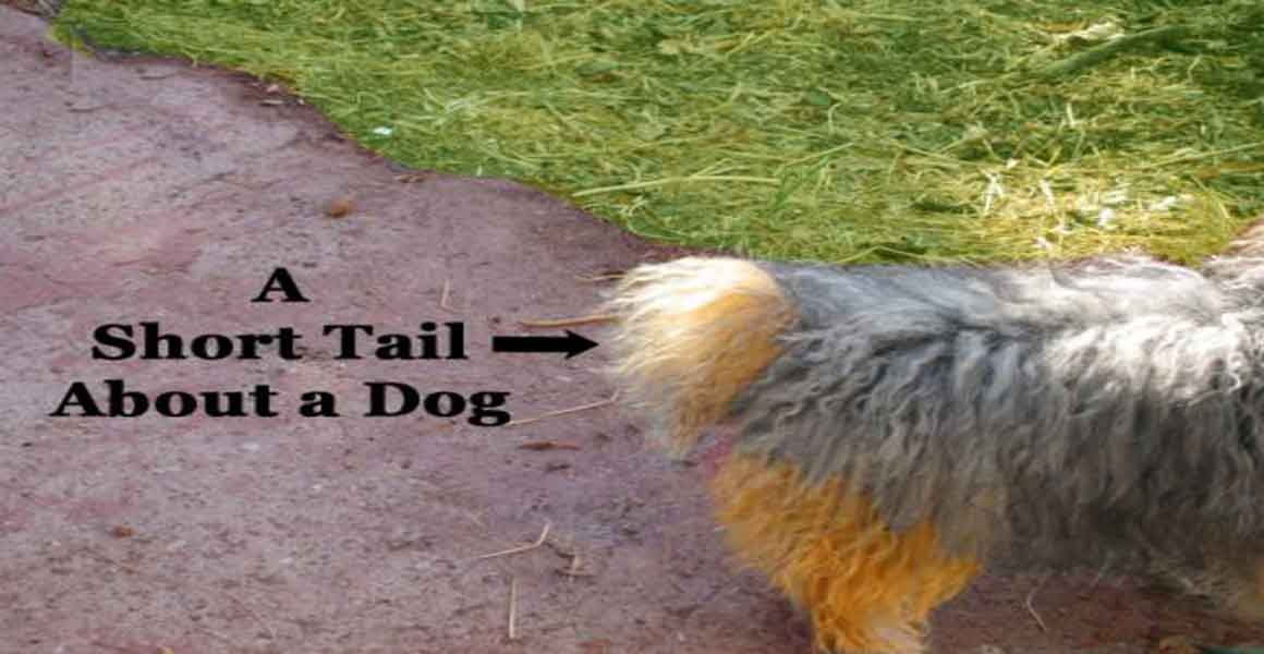 A Short Tail About a Dog